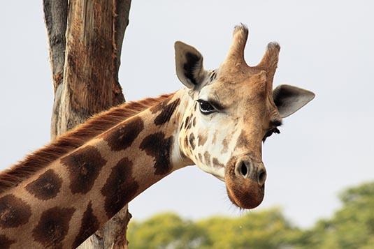 essay approximately mysore zoo website
