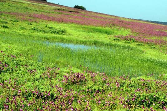 Satara India  city photos gallery : Kaas Plateau, Satara, India